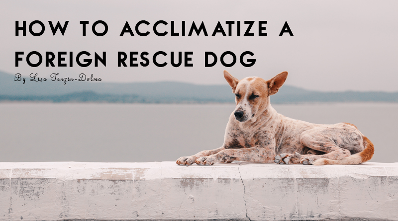 How To Acclimatize a Foreign Rescue Dog